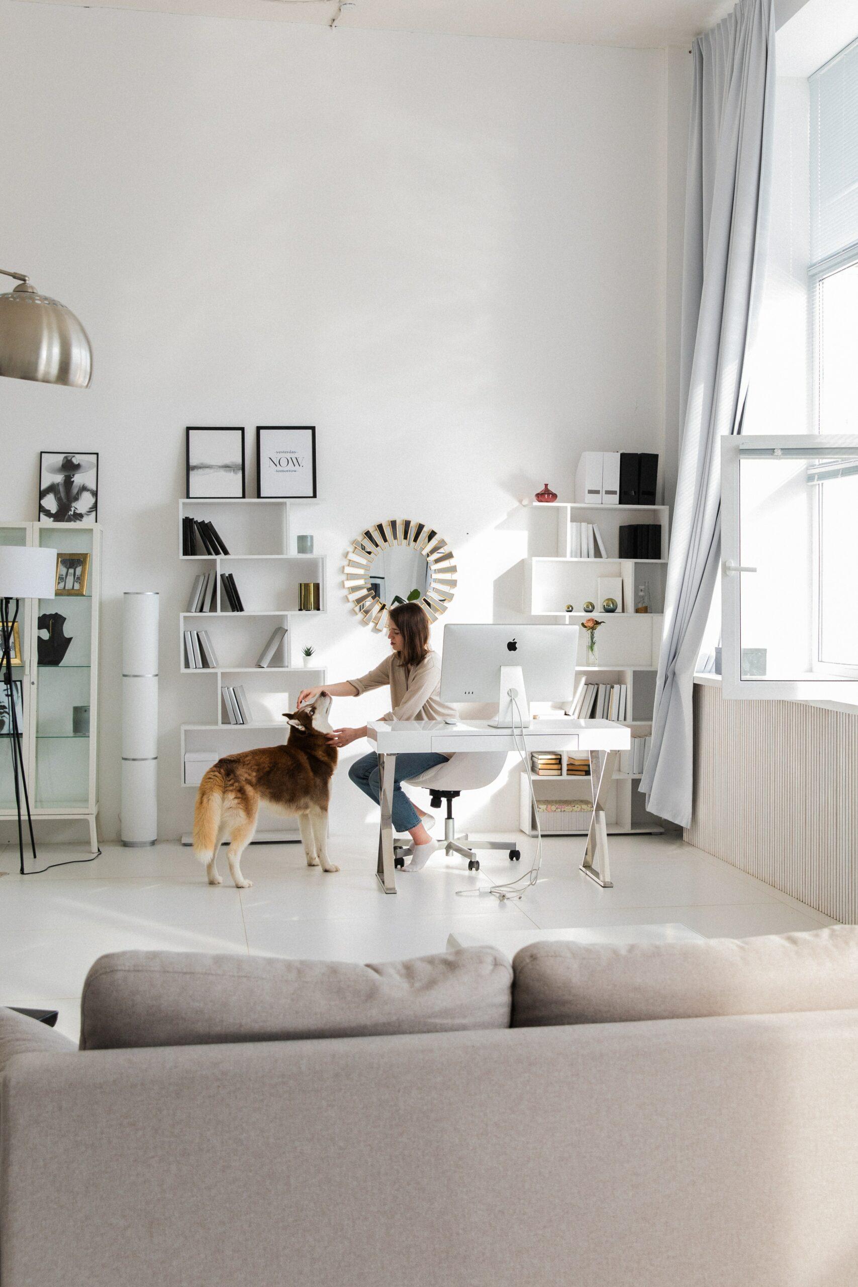 scrivania con cane